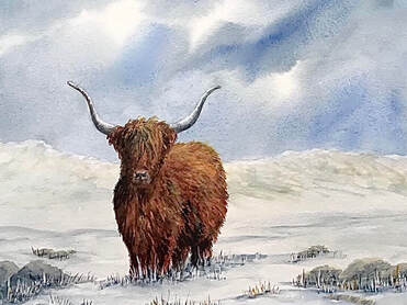 Highland cow, highlands, scotland, art, painting, watercolour, pam marchant, cow, cattle, Picture