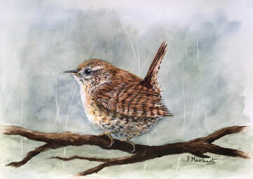 wren, painting, nature, art, wildlife, bird, pam marchant, Picture