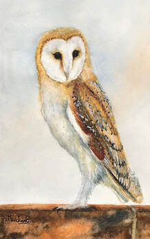 barn owl, painting, art, wildlife, bird, nature, artist, wiltshire, pam marchant, Picture
